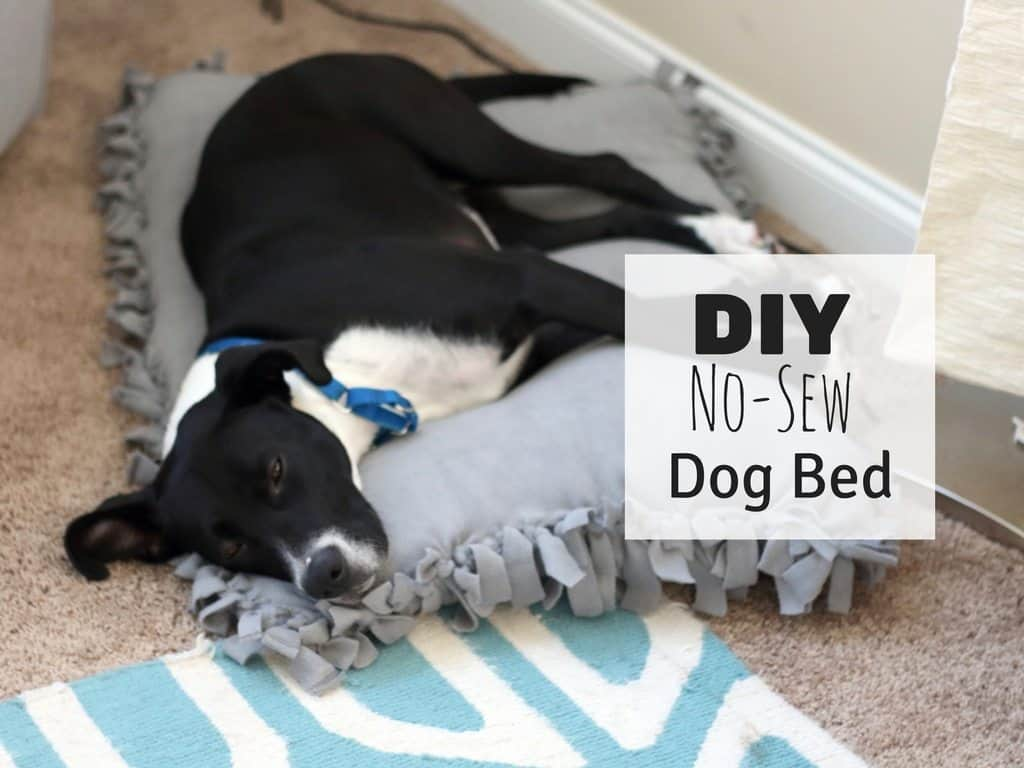 Diy No Sew Dog Bed For Under 10 Saving You Dinero