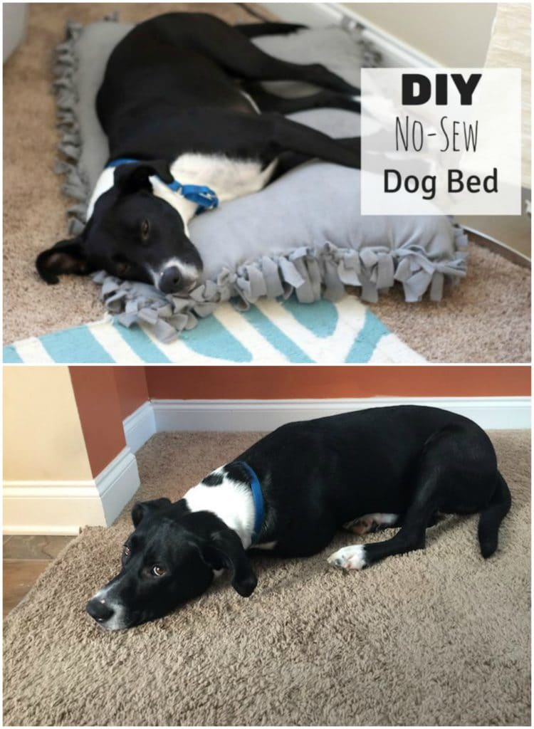 A new pet bed doesn't have to be expensive. You can make this DIY No Sew Pet Bed with just a few supplies and your puppy will be happy.