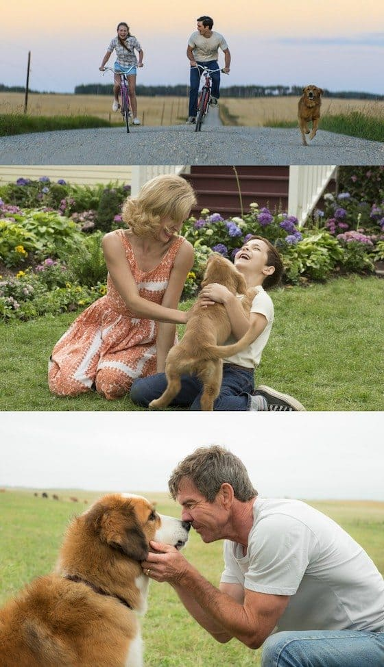 See A Dog's Purpose In January 27 + Enter To Win A Prize Pack #ADogsPurpose