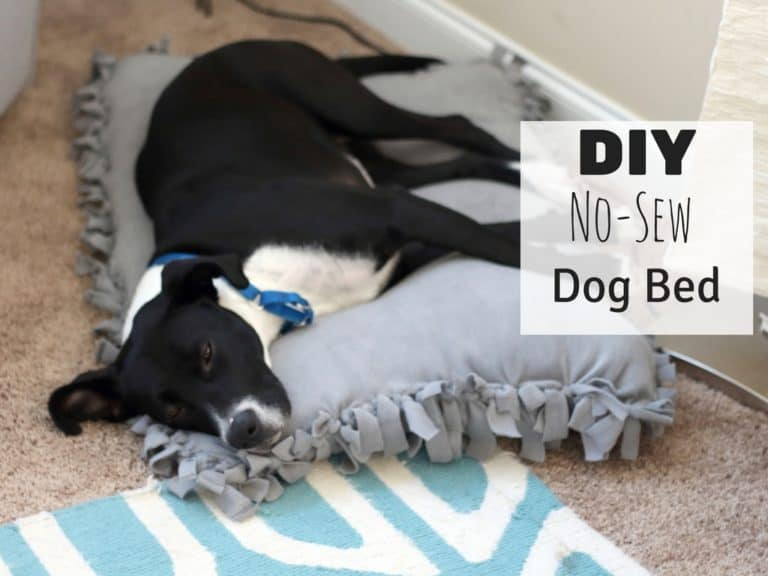 DIY No-Sew Dog Bed For Under $10
