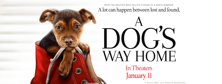 Make Plans To See A Dog's Way Home This Weekend + Giveaway