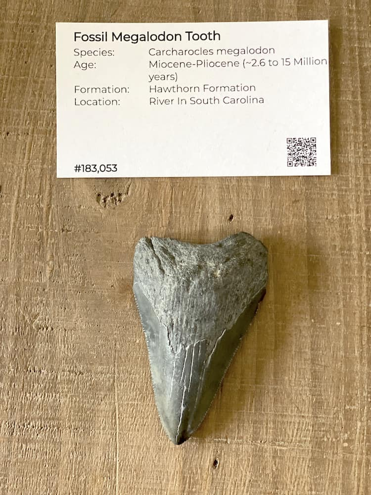 Find a unique gift idea for anyone with all these awesome fossils from FossilEra.com. They have geodes, megalodon teeth, and more!